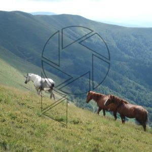 Koně na pastvinách