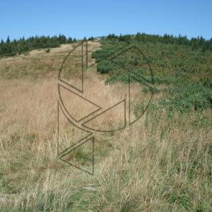 Souboj trávy a kosodřeviny