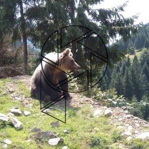 Zakarpatský medvěd