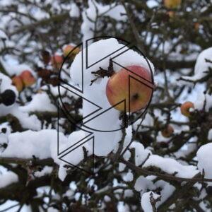 Jablko (2021)
