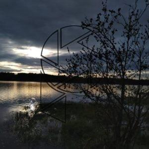Strom u přehrady (2020)